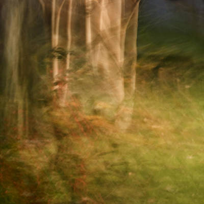 Photograph - Sacred Grove by Margaret Denny