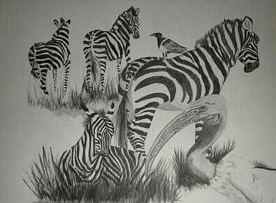 Drawing - Sacred Ibis And Zebras by Joan Mansson