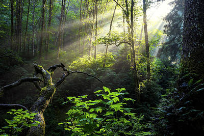 Green Photograph - Sacred Light by Chad Dutson