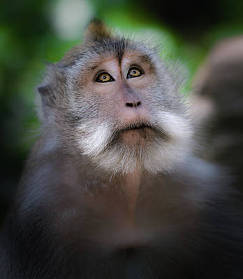 Monkey Photograph - Sacred Monkey Forest Sanctuary by Larry Marshall