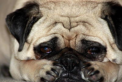 Art Print featuring the photograph Sad Dog by Michael Albright