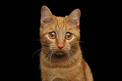 Photograph - Sad Ginger Cat  by Sergey Taran
