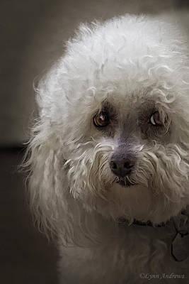 Canine Digital Art - Sad by Lynn Andrews