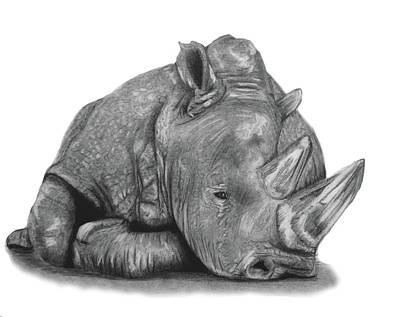 Drawing - Sad Rhino by Claire Fagan
