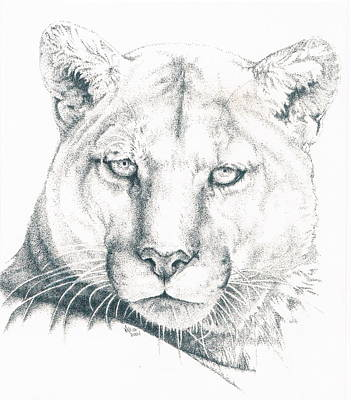 Drawing - Sadaki by Barbara Keith