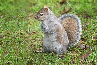 Photograph - Sadie Squirrel by Peg Runyan