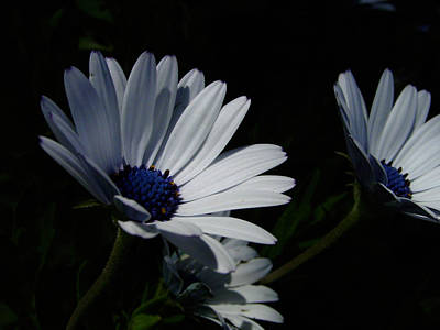 Blue Flowers Photograph - Sadness And Yearning by Edan Chapman