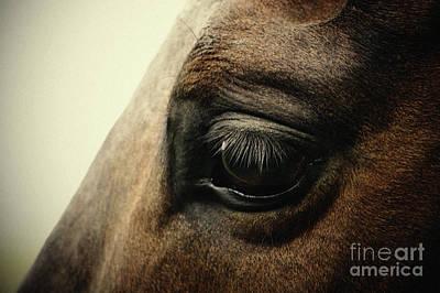 Photograph - Sadness Horse Eye by Dimitar Hristov