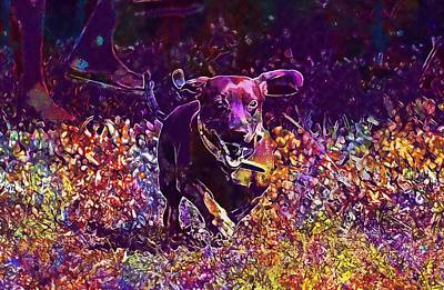 Dachshund Art Digital Art - Saesoe Dachshund Pet Crazy Dog  by PixBreak Art