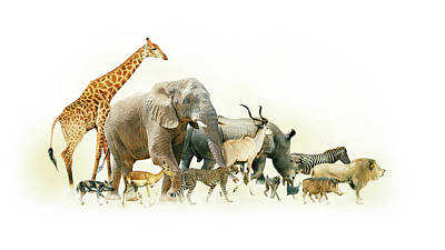 Safari Animals Walking Side Horizontal Banner Art Print by Susan Schmitz