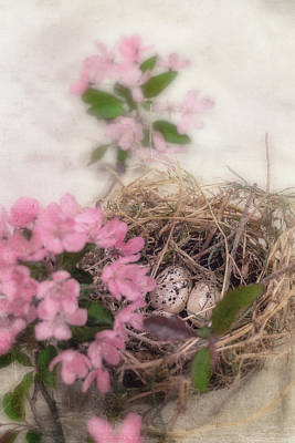 Photograph - Safe In The Nest by Eleanor Caputo