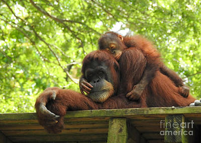 Photograph - Safe With Mom by Lisa L Silva