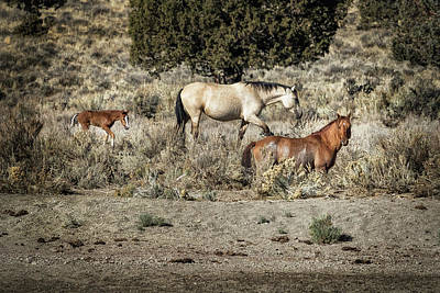 Red Dun Horse Photograph - Safeguard This Tiny Foal by Belinda Greb