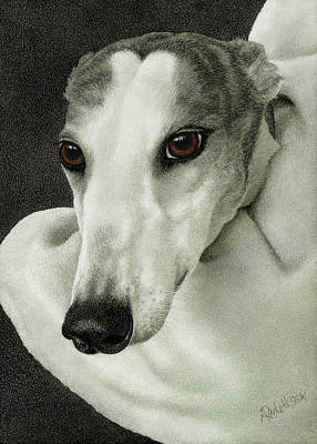 Rescued Greyhound Drawing - Safety by Ann Ranlett