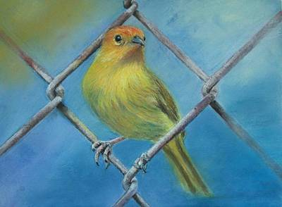 Art Print featuring the painting Safron Finch by Ceci Watson