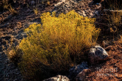 Photograph - Sage Advice by Jon Burch Photography