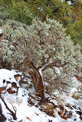 Photograph - Sage Brush Williams Arizona by Donna Greene