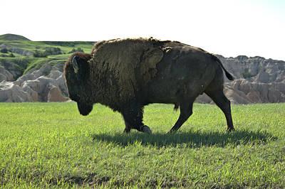 Photograph - Sage Creek Bison by Bonfire Photography