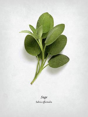 Sage Art Print by Mark Rogan