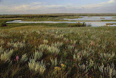 Souris Photograph - Sage Prairie And Marsh In Upper Souris by Gerry Ellis