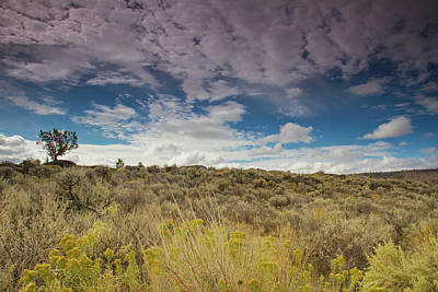 Photograph - Sagebrush And Clouds by Kunal Mehra