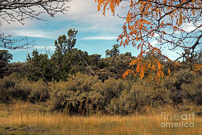 Photograph - Sagebrush And Lava by Cindy Murphy - NightVisions