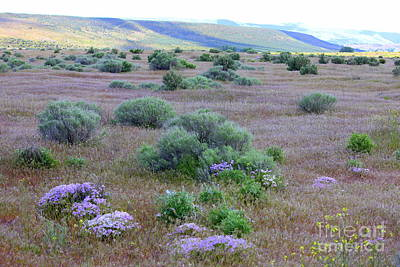 Phlox Photograph - Sagebrush And Wildflowers by Carol Groenen