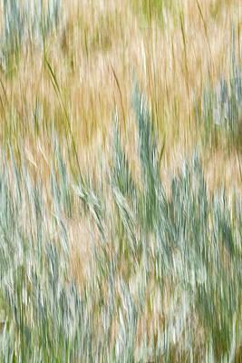 Photograph - Sagebrush Shimmy by Deborah Hughes