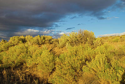 Photograph - Sagebrush Sunset by Kunal Mehra