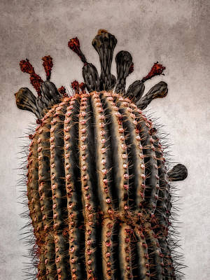 Digital Art - Saguaro In Bloom by Sandra Selle Rodriguez