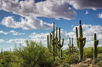 Photograph - Saguaro And Blue Skies Ahead  by Saija Lehtonen