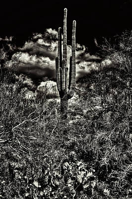 Photograph - Saguaro And Clouds by Roger Passman