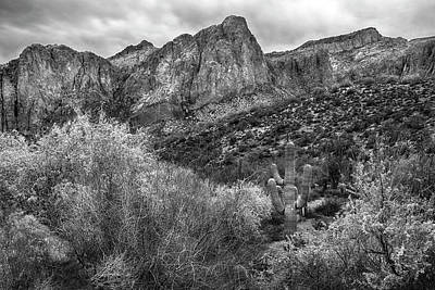 Photograph - Saguaro And Mountains At Saguaro Lake by Dave Dilli