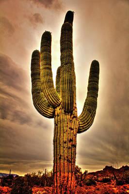 Photograph - Saguaro And Slate Gray Winter Sky by Roger Passman