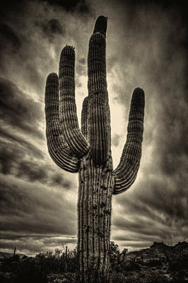Photograph - Saguaro And Storm Clouds by Roger Passman