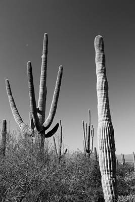 Photograph - Saguaro And Tiny Moon Bw by Mary Bedy