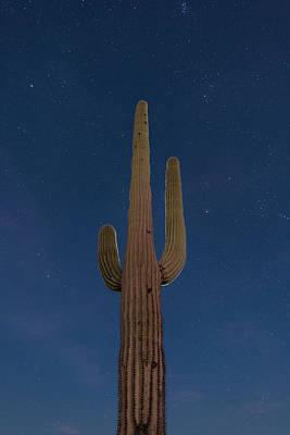 Saguaro At Night Art Print by Steve Gadomski