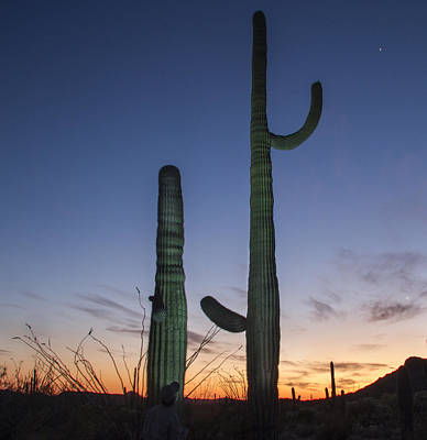 Photograph - Saguaro At Twilight by Jean Noren