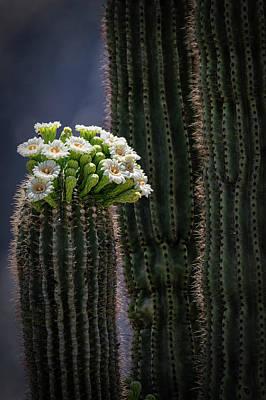 Photograph - Saguaro Blooms To The Sky  by Saija Lehtonen