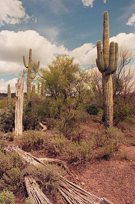 Photograph - Saguaro Bones by Tom Daniel