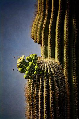 Photograph - Saguaro Cactus And The Bees  by Saija Lehtonen