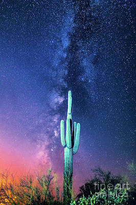 Photograph - Saguaro Cactus And The Milky Way by Robert Loe