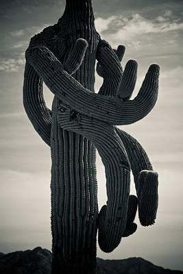 Saguaro Cactus Armed And Twisted Art Print