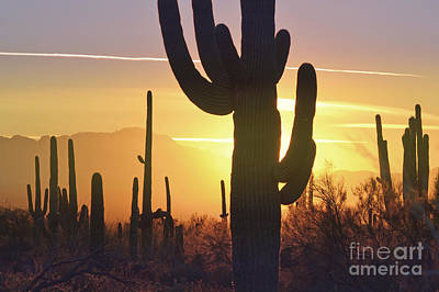 Saguaro Cactus Golden Sunset Mountain Art Print by Andrea Hazel Ihlefeld