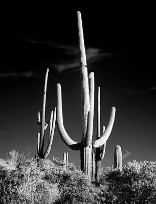 Photograph - Saguaro Cactus by Mountain Dreams