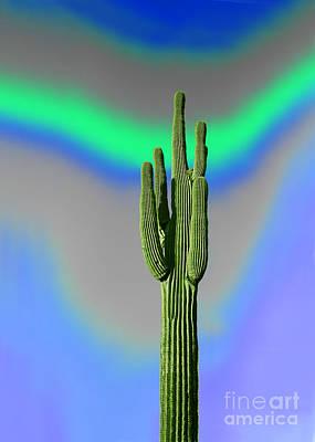 Photograph - Saguaro Cactus Meditation by Wernher Krutein
