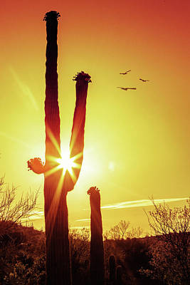 Photograph - Saguaro Cactus Silhouette At Sunrise by Susan Schmitz