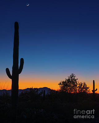 Photograph - Saguaro Cactus Silhouette At Sunset - Tucson - Arizona   by Gary Whitton