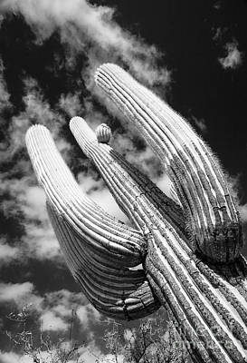 Photograph - Saguaro Cactus Standing Proud Against The Cloudy Sky by Olivier Steiner