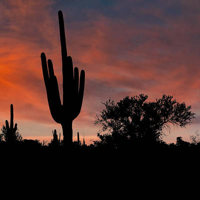 Photograph - Saguaro Cactus Sunset Dsc08291 by Greg Kluempers